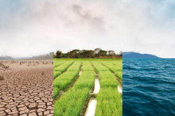 Climate Change and Biofuel